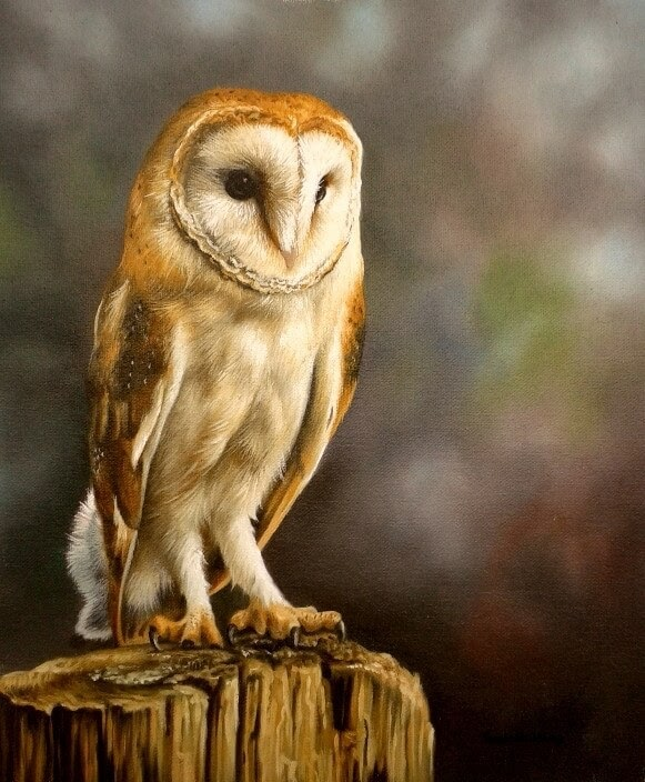 01-Barn-Owl-Sarah-Stribbling-A-Wildlife-and-Pet-Portrait-Artist-www-designstack-co