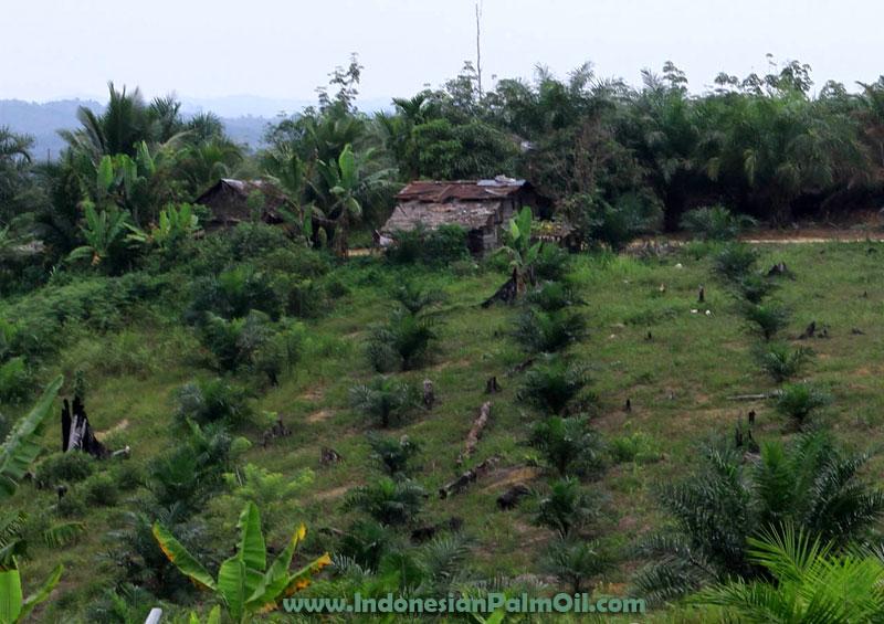 kategori lahan yang masuk moratorium kelapa sawit
