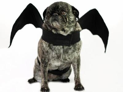 halloweensky kostym pro psa