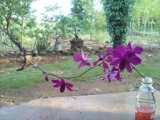bunga mawar, bunga melati, bunga kenanga, bunga bougenfil, bunga kamboja, bunga angrek dan bunga desa