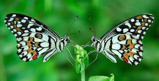 vlinders-1.jpg