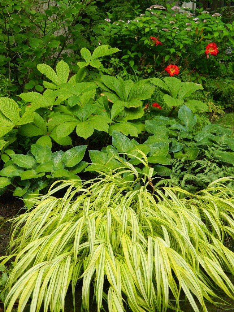Garden Muses Not Another Toronto Gardening Blog A Shade Garden
