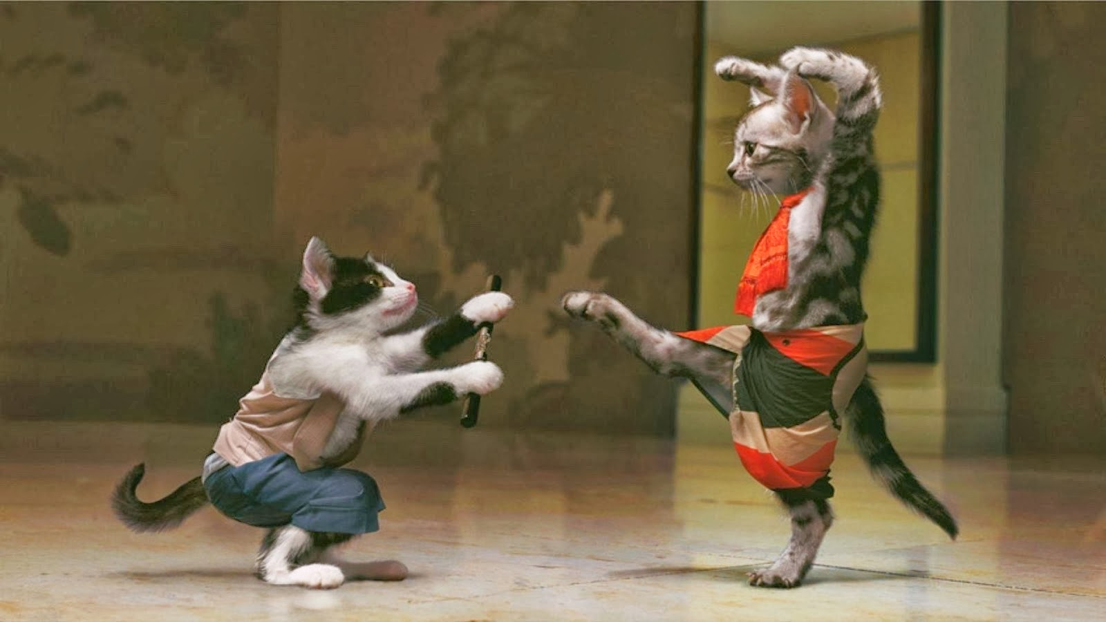 Funny animal wallpapers interesting new pictures funny - Funny animal wallpapers ...