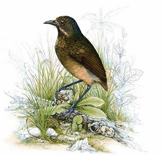 Imagen vía WikiEVA http://wikieva.org.ve