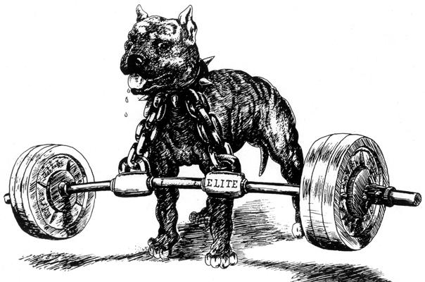 Immortal Fitness Blog Westside Strength Training