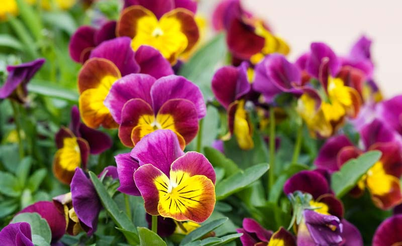 12 Flowers That Ll Bloom Even In The Dead Of Winter