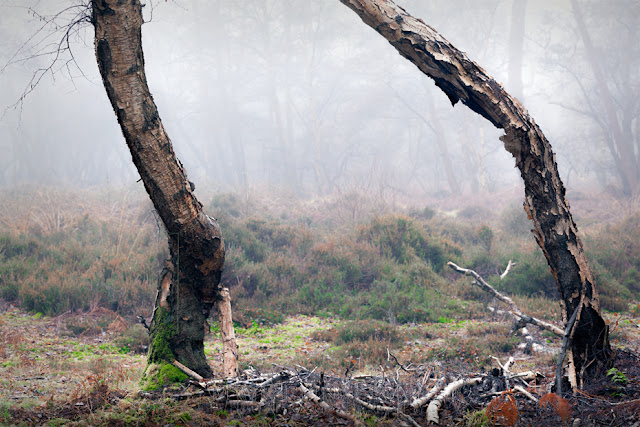Two tree trunks frame the mist filled woodland at Holme Fen