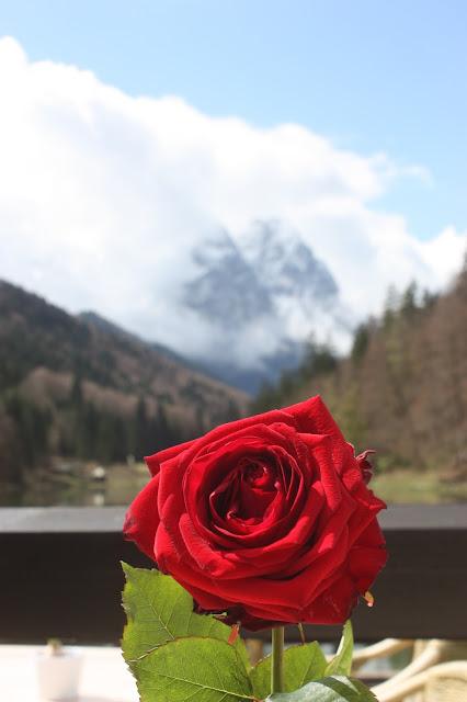 Rote Rosen Frühlingshochzeit am Riessersee in Garmisch-Partenkirchen, Bayern - Red roses wedding in Germany, Bavaria, Riessersee Hotel
