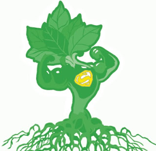 super plante pour perdre du poids