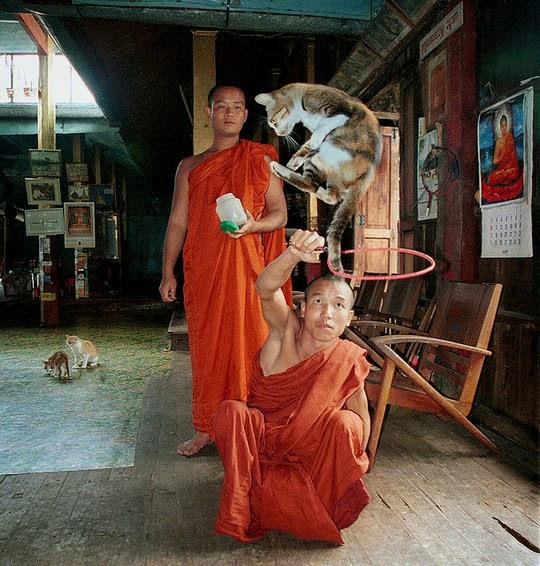 Jumping Cat Monastery Myanmar
