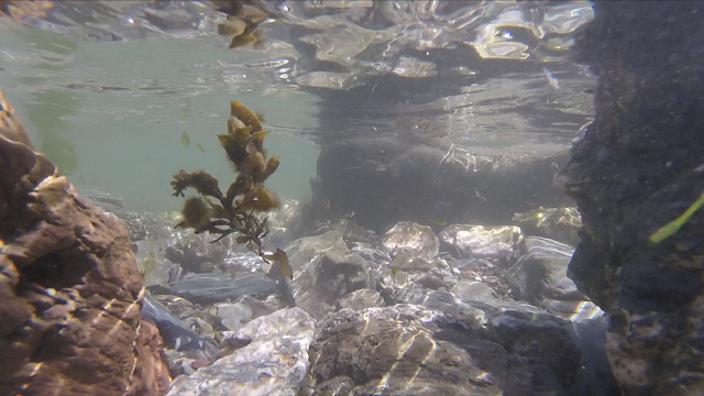 rising tide and seaweed on Looe beach from underwater perspective