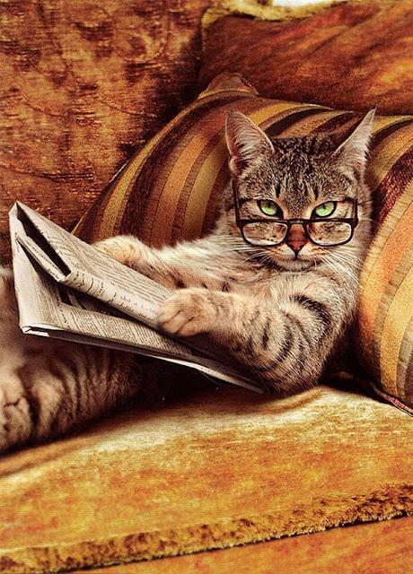 """9 sự thật """"khó tin"""" dành riêng cho người yêu mèo"""