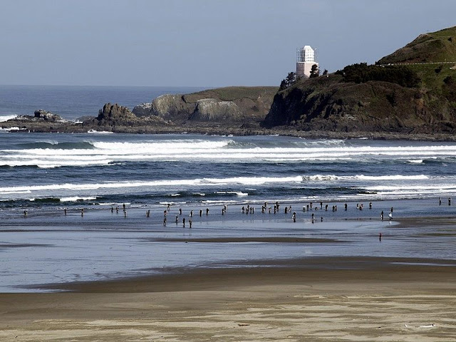 A picture of coast, seabird, wave, rock cliff and Lighthouse at Newport Beach Cf