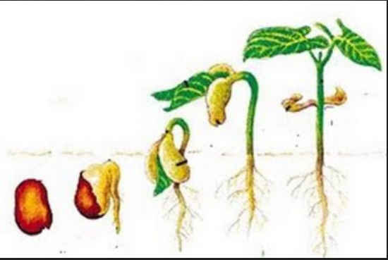Faktor-Faktor Yang Mempengaruhi Pertumbuhan dan Perkembangan Tumbuhan