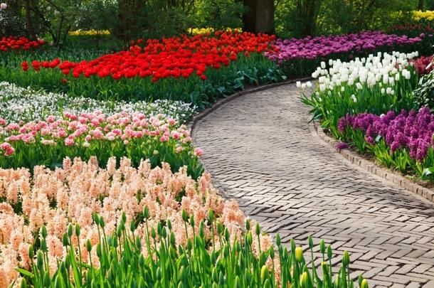 Цветники из первоцветов