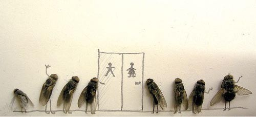 Memang Menjijikan, Tapi Tahukah Jika Allah Menciptakan Lalat Bukan Asal-Asalan?