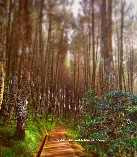Bukit Moko, Bukit Puncak Bintang,Wisata Panorama Alam Romantis Di Kota Bandung