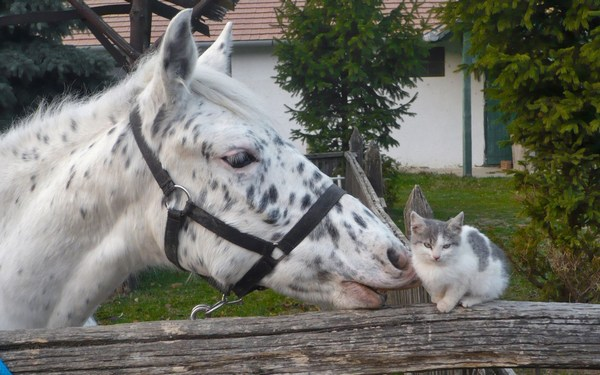 Pictures of White Horses Love with Sweet Cat