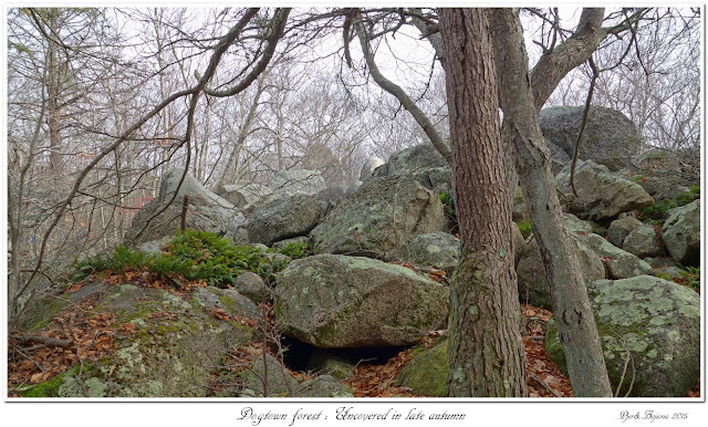Dogtown forest: Uncovered in late autumn