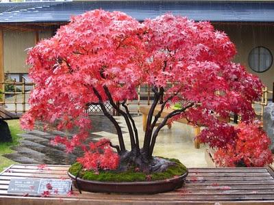Indoor Gardening!: Best Bonsai Trees for Beginners