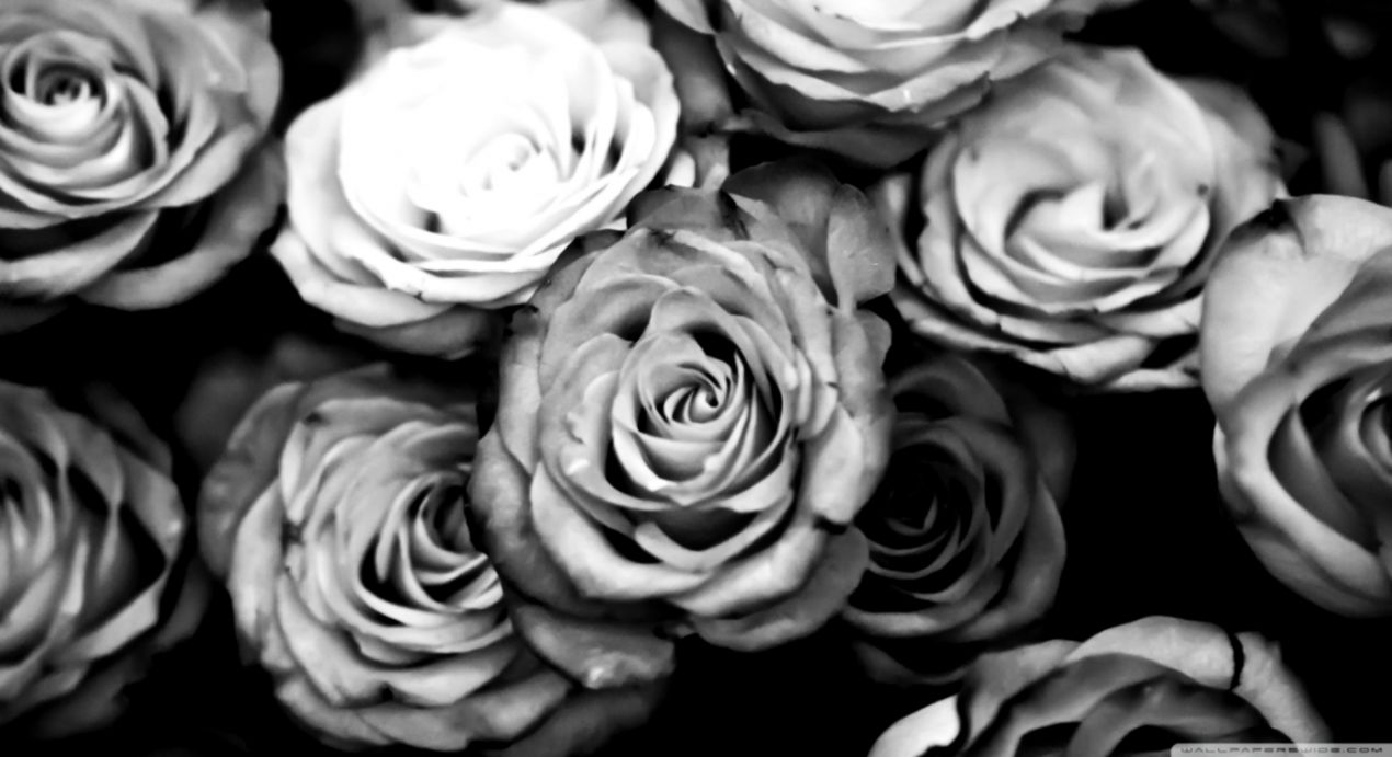 Roses black and white ❤ 4k hd desktop wallpaper for 4k ultra hd