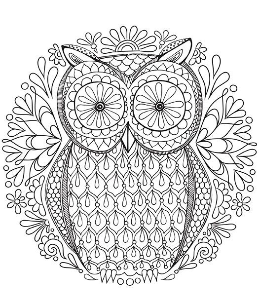 mandala art owl grown up coloring book