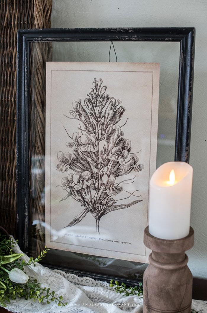 Vintage inspired botanical print