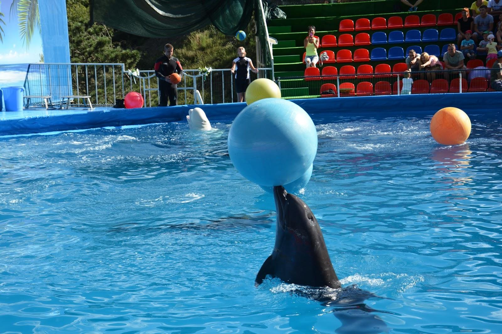 дельфинарий ялта фото этого