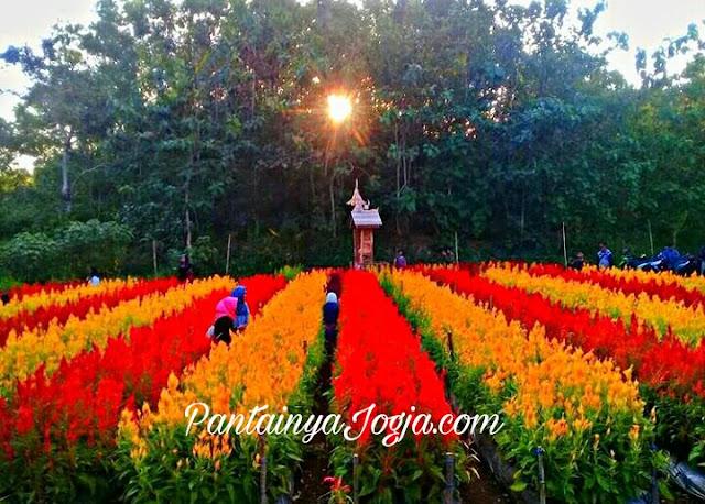 taman bunga di gunungkidul