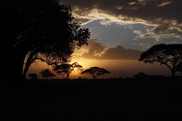 tansania safari afrikka matka tarangire baobab