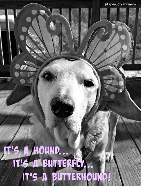 senior rescued hound mix dog dressed up for spring