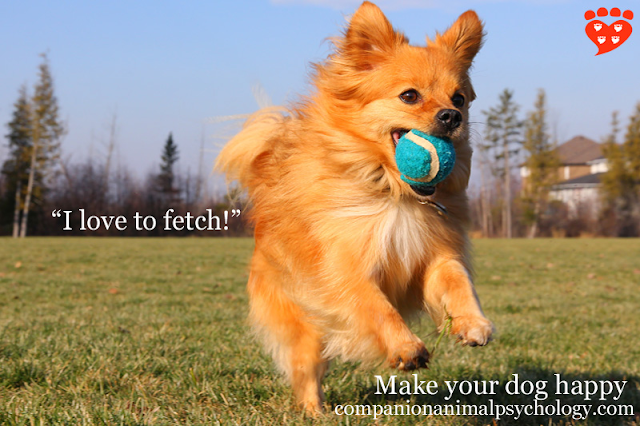 Cute little dog loves fetch, one of many ways to entertain your dog