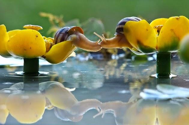 snail-macro-photography-vyacheslav-mishchenko