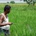 Enfermedad Mortal relacionada a un pesticida de Monsanto
