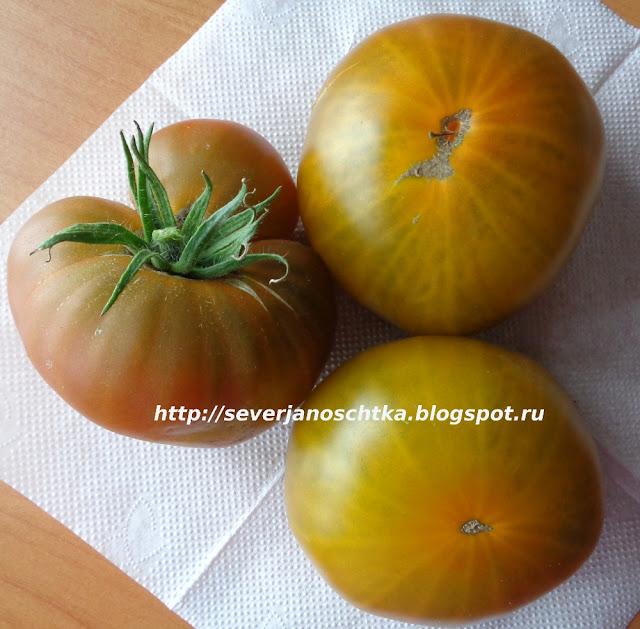 томаты сотра Искуситель