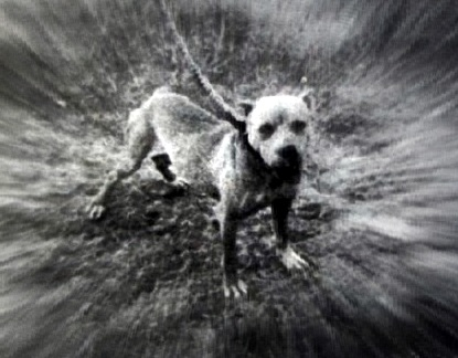 INDIAN BOLIO ROM   SPORTING DOG NEWS