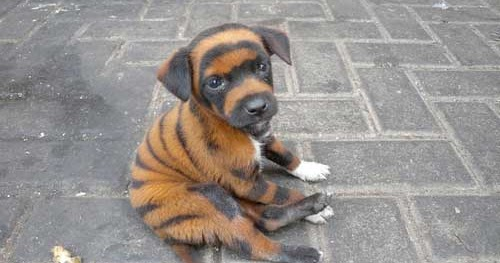 Can You Order Custom Made Genetically Bred Dogs Online Yet