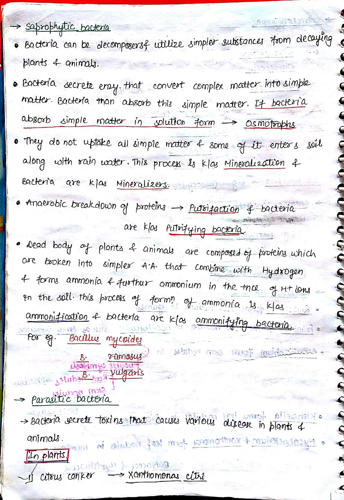 PCB Notes: Kingdom Monera Notes (biology)