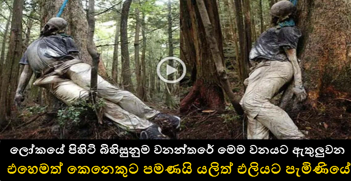 Japan's Suicide Forest Deaths - True Scary Horror Stories | Dan Hari