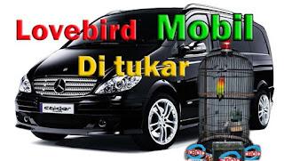 Wow Lovebird Durasi 4 Menit UP Di Tukar 1 Mobil Mercedez Benz Viano