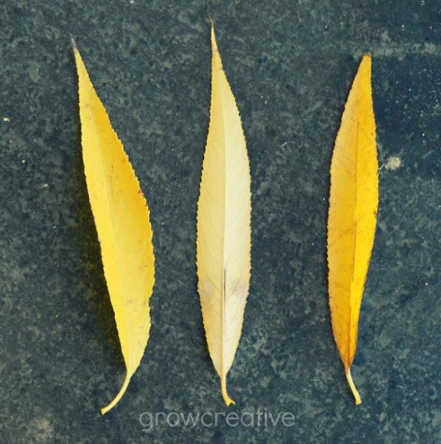 Yellow leaves: Grow Creative