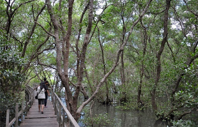 hutan-mangrove2