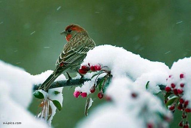 VINE IARNA???? Winter005294vipics