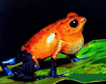 spesies-katak-beracun