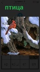 изображение птицы на ветке дерева