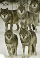 pack, wolves pack