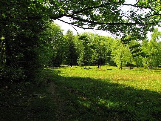 Niedaleko od bacówki u podnóża Mareszki.