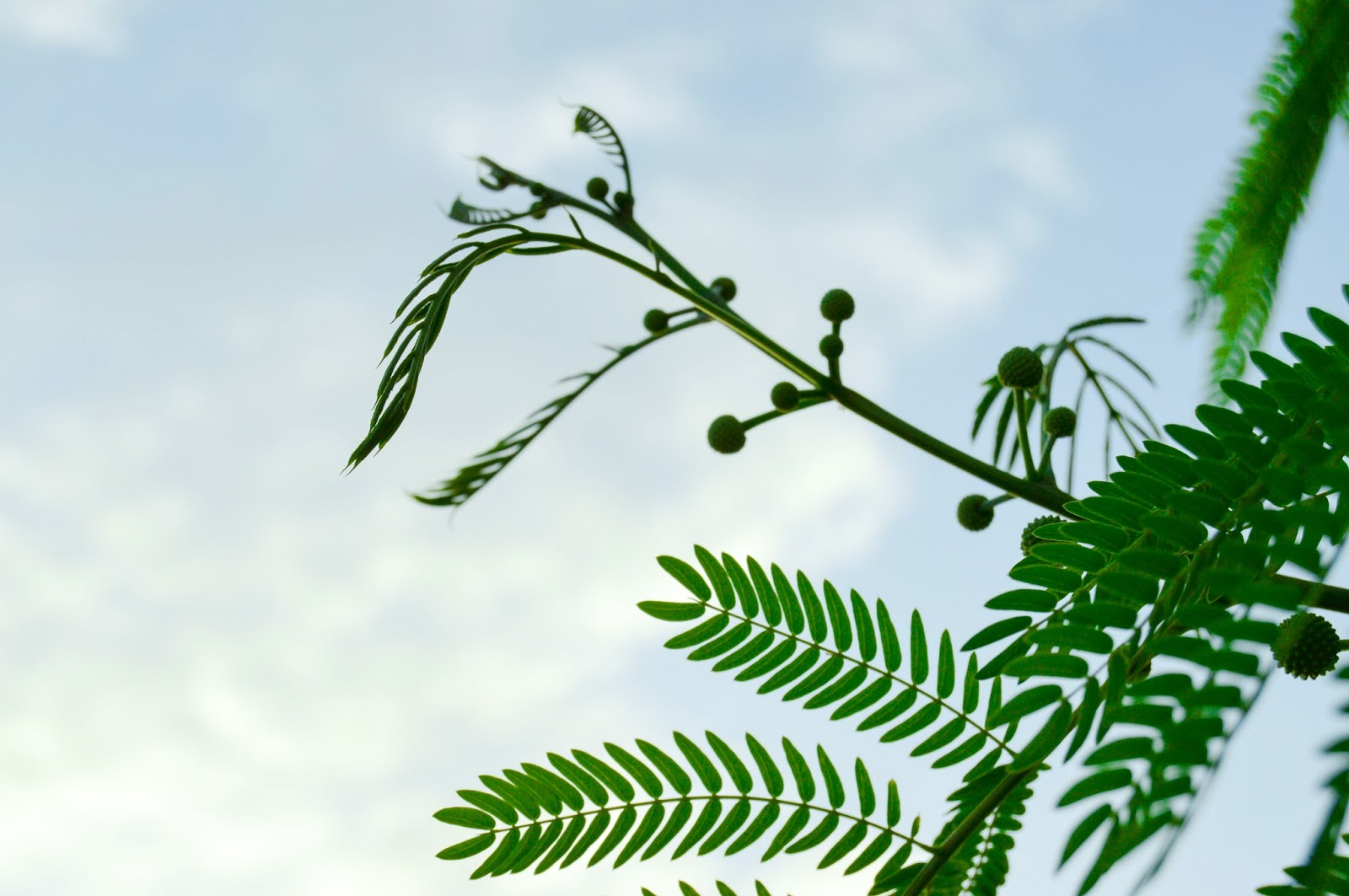 Green Leaves & Sky View Free Stock Photos & Wallpapers