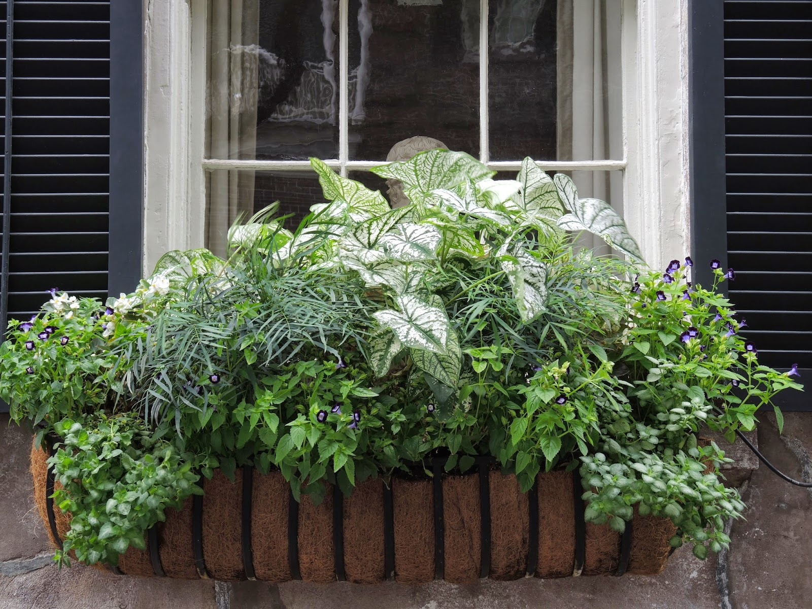 shade tolerant window box design historic charleston home south carolina