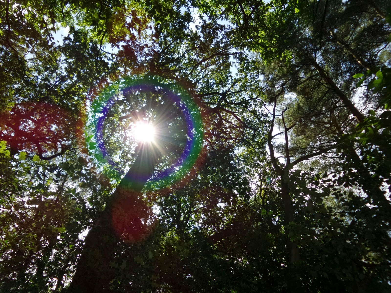 Picture of trees with Circular Rainbow Lens Flare